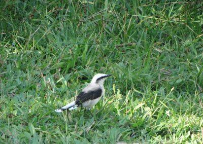 BIRD015