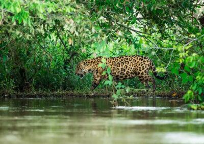 Expedição Fotográfica Pantanal
