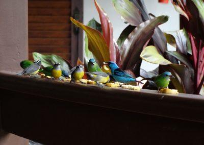 BIRD017