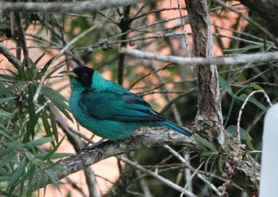 BIRD04