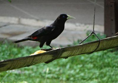 BIRD13