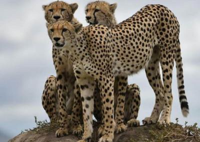 Expedição Fotográfica Serengeti – Tanzânia