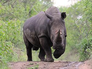 Safári Clássico – África do Sul