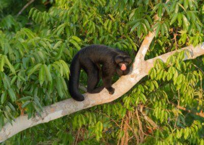 cristalino macaco 3